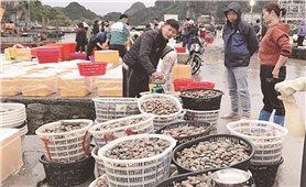 Thủy hải sản ở Vân Đồn: Đứng trước nguy cơ cần giải cứu