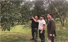 Ứng dụng khoa học công nghệ trong sản xuất nông nghiệp: Nâng cao giá trị sản phẩm