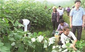 Thanh Hóa: Cần tăng cường vận động nông dân ứng dụng KHKT