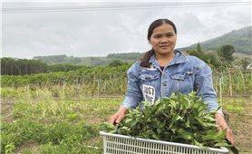 Đưa rau rừng trở thành hàng hóa
