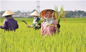 An ninh lương thực và quyền lợi của nông dân