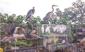 Buôn bán, tiêu thụ động vật hoang dã: Mối họa cho sức khỏe con người