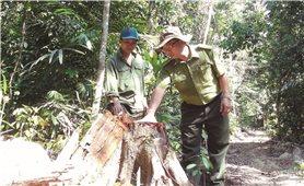 Phú Yên: Lâm tặc ngang nhiên mở đường phá rừng phòng hộ