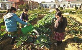 """""""Trường học nông trại"""" trên đỉnh Tà Mung"""