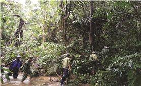 """A Lưới (Thừa Thiên - Huế): Lợi ích """"kép"""" từ chi trả dịch vụ môi trường rừng"""