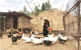 Người đưa cây lúa nước về Táng Ngá