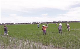 Nông dân Vĩnh Phúc vì một nền nông nghiệp an toàn
