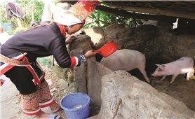 Thực hiện Đề án 2085 ở vùng DTTS tỉnh Quảng Ninh: Niềm vui đến với đồng bào DTTS nghèo