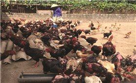 Chủ động chống nóng cho đàn vật nuôi