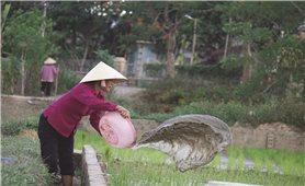Thanh Hóa: Thiếu nước nghiêm trọng do khô hạn kéo dài