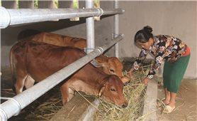 Nghệ An: Hiệu quả từ hỗ trợ các giống cây trồng, vật nuôi địa phương