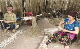 Cây lanh trong đời sống của đồng bào Mông