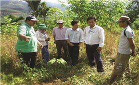 Dự án trồng rừng gỗ lớn ở Quảng Ngãi: Vì sao khó đạt như kỳ vọng