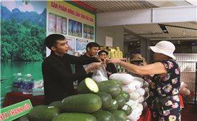 Thoát nghèo từ trồng bí xanh theo tiêu chuẩn VietGAP
