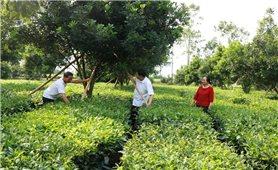 Phát triển Đảng ở huyện Tân Uyên (Lai Châu): Hiệu quả từ việc chủ động tạo nguồn