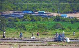 Gia Lai: Phòng, chống dịch gắn với phát triển kinh tế - xã hội