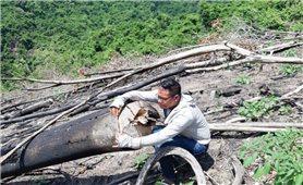 Bình Định: Công tác quản lý, bảo vệ rừng còn nhiều hạn chế