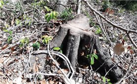 Khánh Vĩnh: Cần xử lý dứt điểm tình trạng lấn chiếm đất rừng