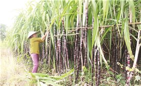 Khánh Hòa: Nâng cao chất lượng cho sản phẩm OCOP