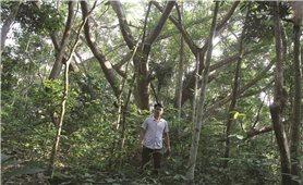 Tạ ơn rừng thiêng