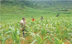 Thực hiện Chương trình 135 ở Cao Bằng: Mang lại diện mạo mới cho vùng khó