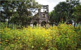 Hoa vàng rực rỡ quanh nhà thờ H'Bâu