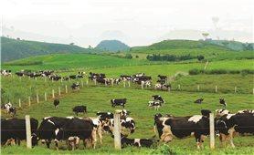 Chiến lược phát triển chăn nuôi đến năm 2030, định hướng đến năm 2040: Thời cơ và vận hội