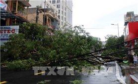 1 người chết, 1 người mất tích, 110 người bị thương do bão số 5