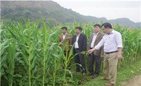 Nghị quyết số 09 của Tỉnh ủy Thanh Hóa: Thúc đẩy phát triển miền núi