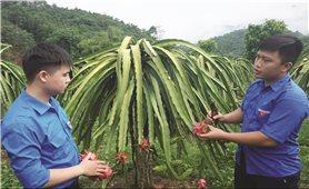 Lào Cai: Điểm sáng phong trào thanh niên lập nghiệp