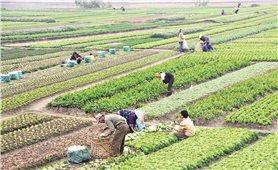 Phát triển nông nghiệp số tại vùng DTTS và miền núi: Xu thế tất yếu để bắt kịp thời đại