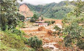 """Diện tích rừng trồng tăng, rừng tự nhiên giảm: """"Thay lâu đài bằng căn nhà lá"""""""
