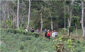 """Vùng cao Hà Giang: Cơ hội làm giàu từ """"cây rừng, quả dại"""""""