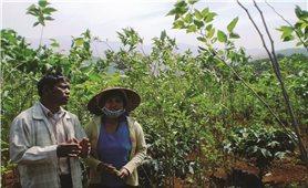 Đam Rông (Lâm Đồng): Điểm sáng giảm nghèo bền vững