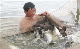 Kỹ thuật nuôi cá chẽm trong ao