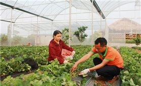 Sơn La: Thực hiện đồng bộ các chính sách giảm nghèo bền vững