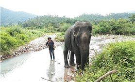 Con voi cuối cùng bên bờ suối Ia Tul