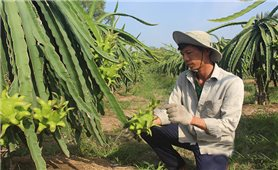 Tiền Giang: Chuyển đổi 7.700 ha đất lúa sang trồng cây ăn quả và nuôi thủy sản