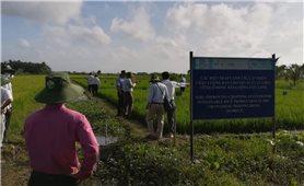 Các biện pháp canh tác cải thiện chất lượng đất cho sản xuất lúa ở ĐBSCL