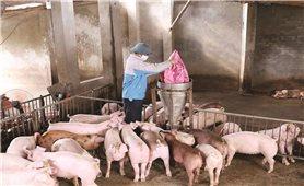 """Chuẩn bị nguồn cung lương thực, thực phẩm cho Tết Nguyên đán: Kiên quyết không để xảy ra """"khan hàng, sốt giá"""""""