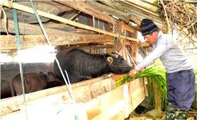 Lào Cai: Dồn sức phòng, chống rét đậm, rét hại