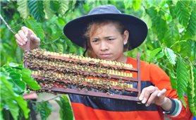 Lâm Đồng: Nhiều hộ đồng bào DTTS thoát nghèo nhờ các mô hình khuyến nông hiệu quả