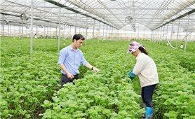 Bắc Ninh: Ứng dụng công nghệ cao, nông nghiệp khoác áo mới