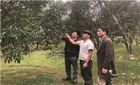 Cao Bằng: Tái cơ cấu nông nghiệp để phát triển bền vững
