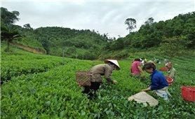 Tuyên Quang: Nông dân tích cực áp dụng Chương trình IPM trên cây trồng
