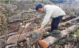 Khánh Hòa: Rừng Suối Tân bị phá, chính quyền