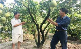 Sản xuất nông nghiệp thông minh ở Hòa Bình: Nông dân hưởng lợi cao