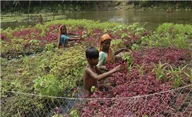 Công nghệ nông nghiệp nổi ở Bangladesh – Cách ứng phó với biến đổi khí hậu