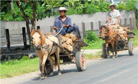 Xe ngựa vùng Bảy Núi