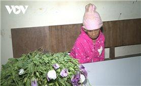 Phát hiện đối tượng 86 tuổi trồng cây thuốc phiện trên nương
